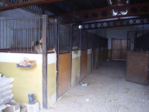 Stable in Spain Stables